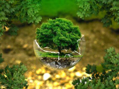 Конкурсные экологические проекты в Москве рассматривает экспертная комиссия