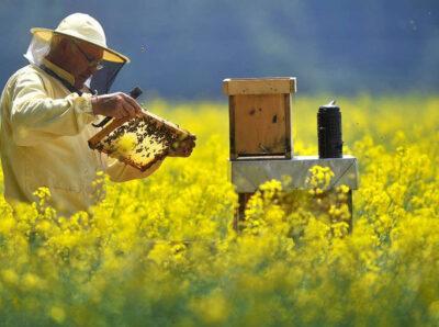 Тамбовские пчеловоды определили порядок разбирательств при массовой гибели пчел