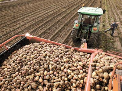 В Минсельхозе РФ назвали пять регионов-лидеров по картофелеводству
