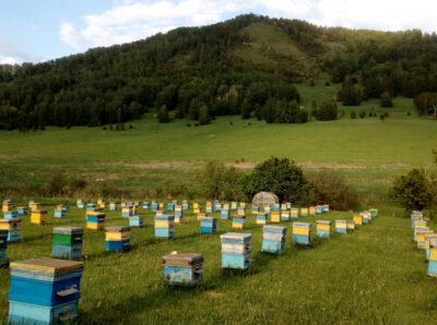 Минсельхоз создаст потребительские сельхозкооперативы по пчеловодству