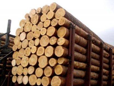 В России ужесточили правила вывоза за рубеж древесины