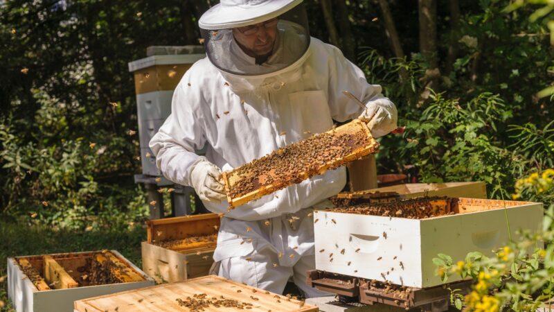 В российском пчеловодстве наведем закон и порядок – Минсельхоз РФ