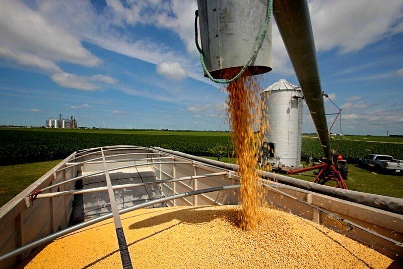 Кабмин снизил экспортную пошлину на соевые бобы на 10%