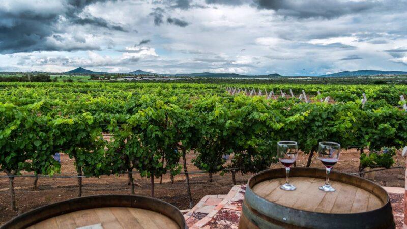 В Союзе виноградарей и виноделов РФ прокомментировали скандал с французским шампанским