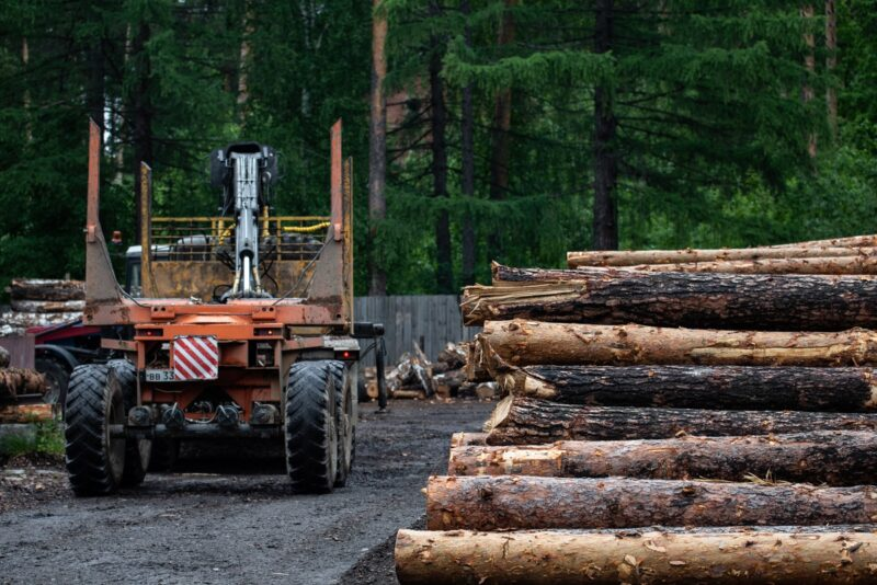 В RFP Group предложили приватизировать русский лес