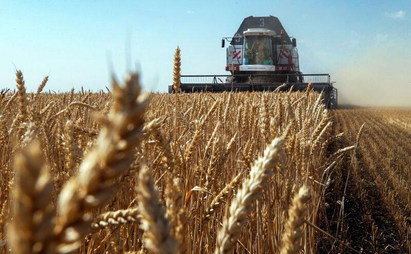 Минсельхоз США обеспокоился урожаем российской пшеницы