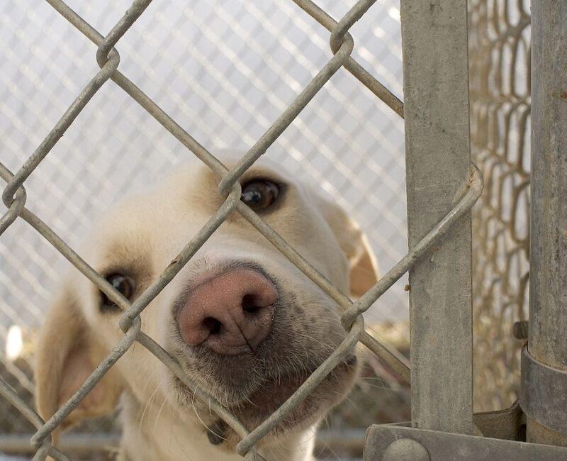 «Зелёные» предлагают ввести меры поддержки для тех, кто берёт животных из приютов