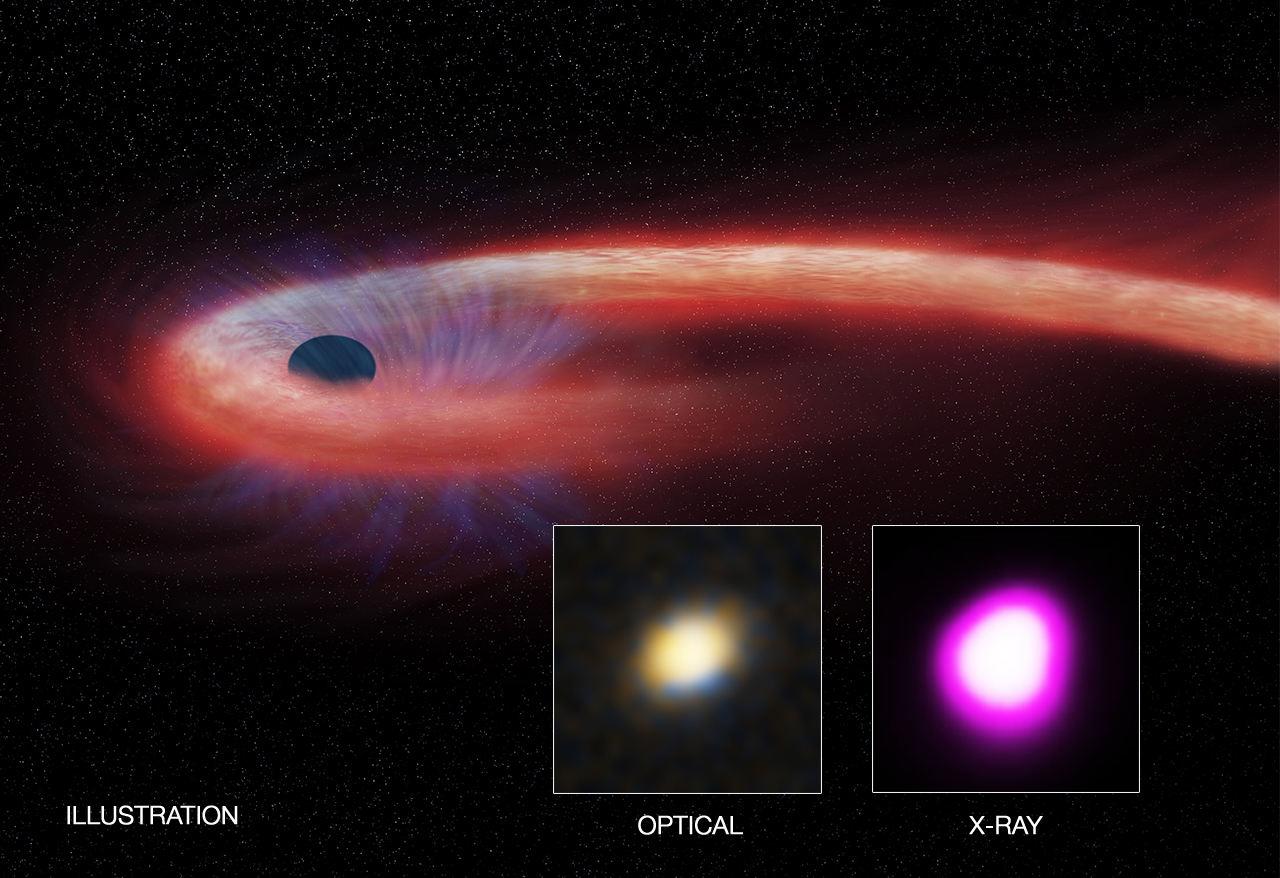 Observation d'une étoile absorbée par un trou noir