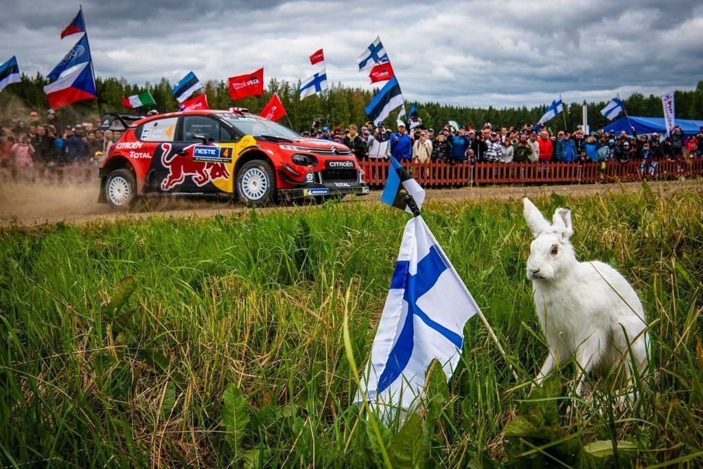 Content rally finsko 2019 ott tanak autozurnal.com 38