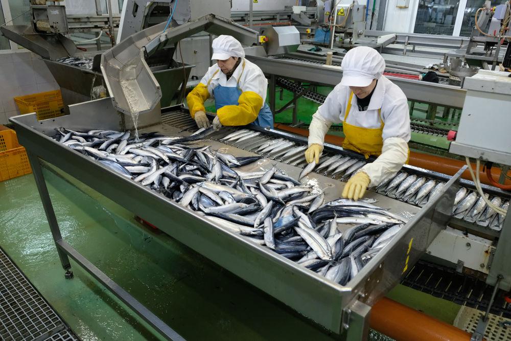 Герман Зверев продолжает играть на стороне китайских рыбопромышленников