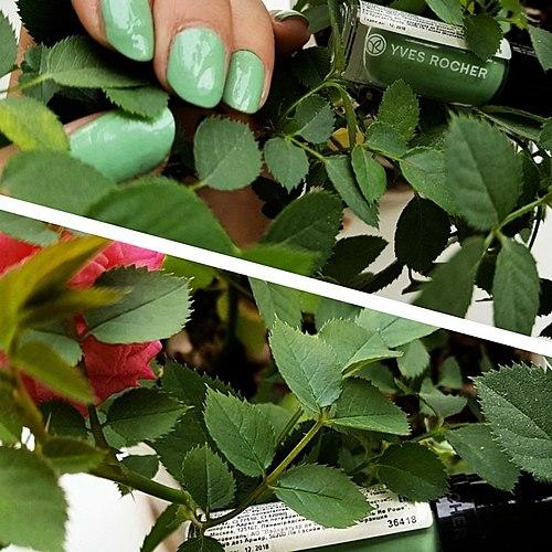 Жасыл сәнді лак үлкен ЕМЕС: Ив Роше Yves Rocher N75 Жұмсақ жалбыз сериясы flash Pop