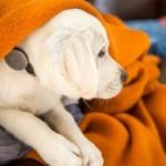 Следящий за активностью собаки ошейник Whistle Dog Collar