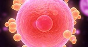 3D-напечатанные яичники успешно протестированы на мышах