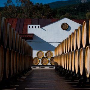 Виноделы Крыма сообщили о сбое в ЕГАИС