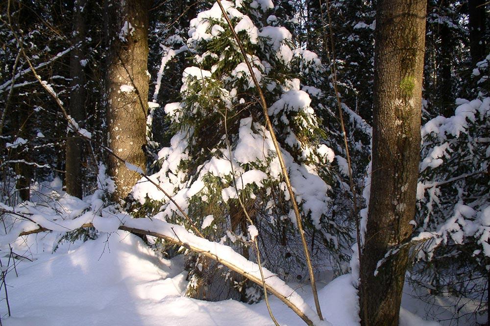 russia-winter-01