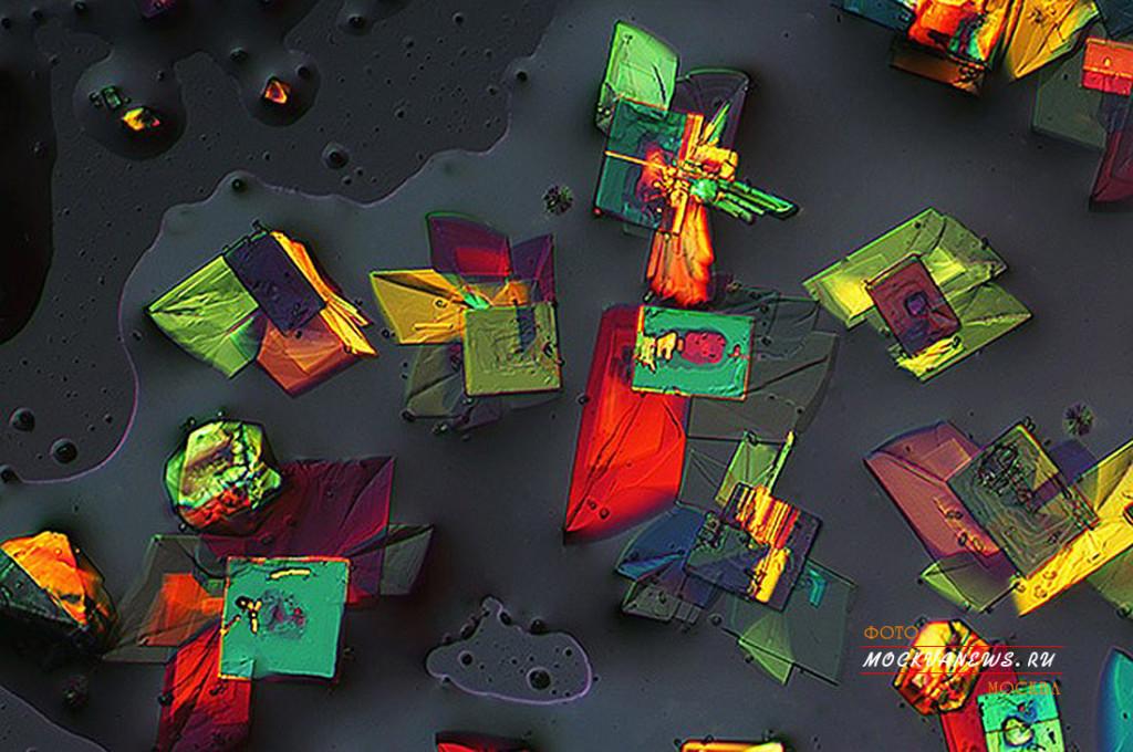 конкурс микрофотографии Nikon Small World