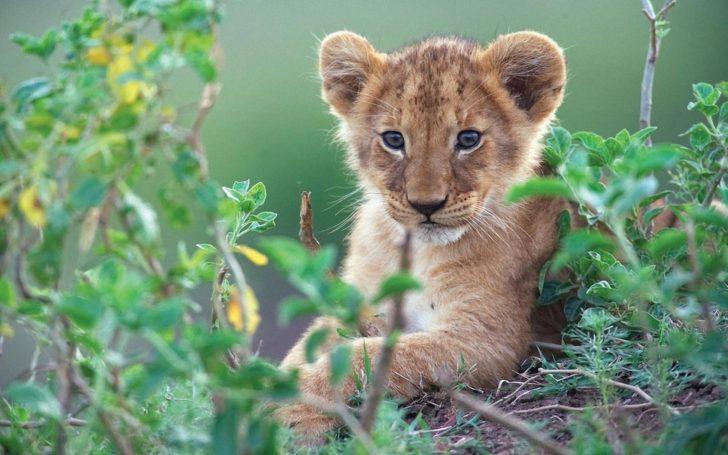 Гадалка в Москве живет со львом