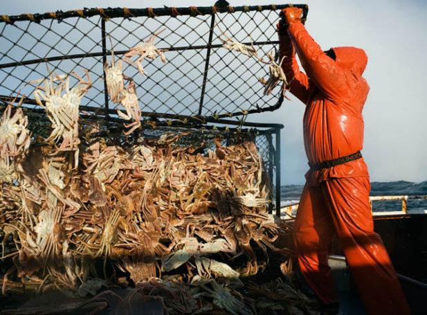 Крабовые клешни в качестве угрозы для рыболовной отрасли РФ