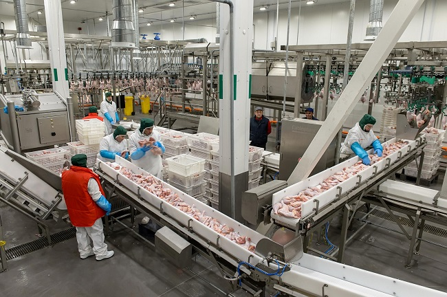 В Калужской области завершен большой инвестпроект – модернизация птицефабрики