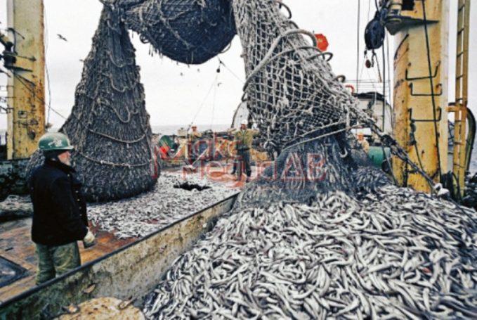 Рыбопромышленники страны обратились с просьбой к Владимиру Путину
