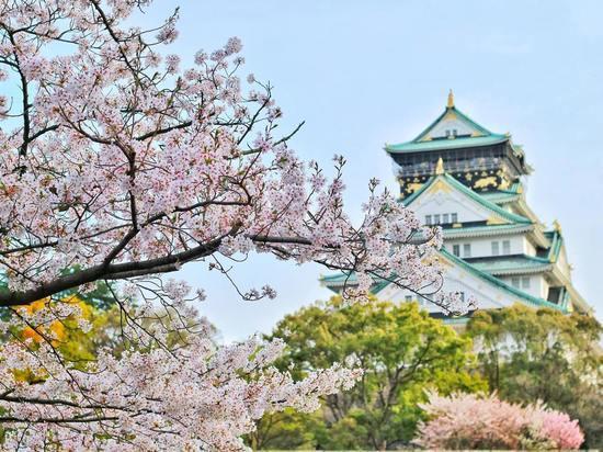 В Год Японии в России 2 россиянина смогут посетить эту страну бесплатно