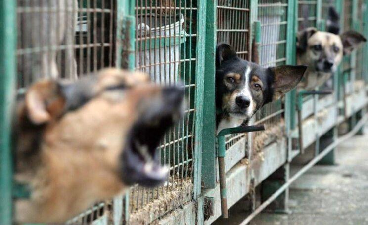 В Светлоярском районе Волгоградской области планируется открытие приюта для животных