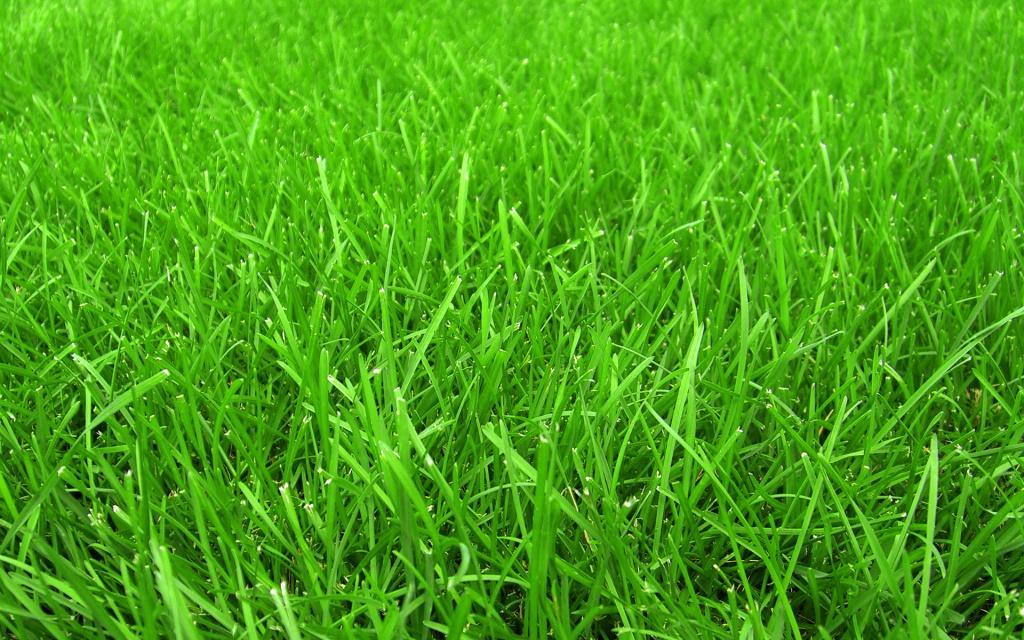 Сезон зеленой травы объявляется открытым!
