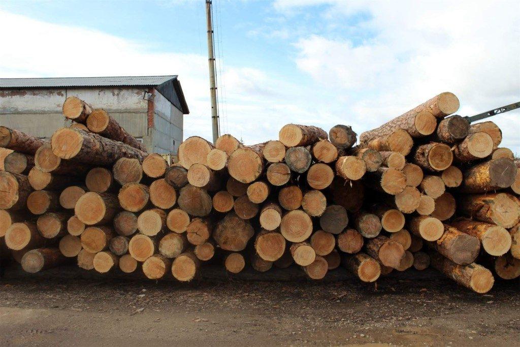 Россия запретит экспорт сырой древесины с 2022 года