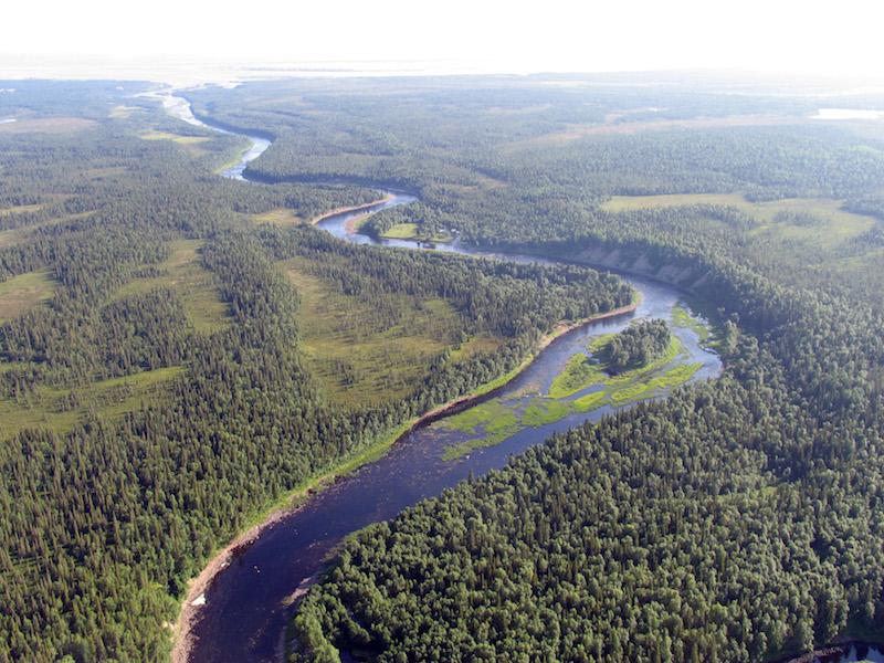 Procter&Gamble и сеть гипермаркетов «Лента» вместе с WWF России защитят от вырубки леса вдоль нерестовых рек