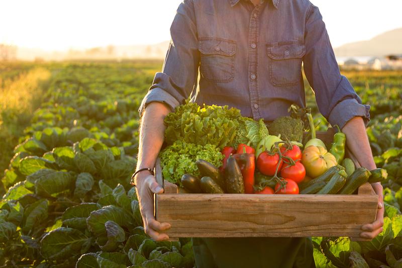 «Народный фермер» планирует решить вопрос с сертификацией продукции для самозанятых