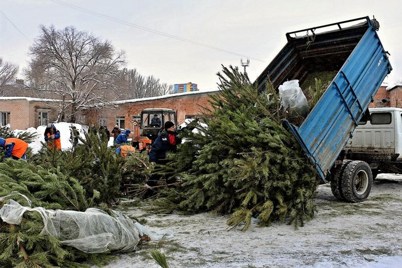 В Московском зоопарке запустили акцию по приему сосен и елок