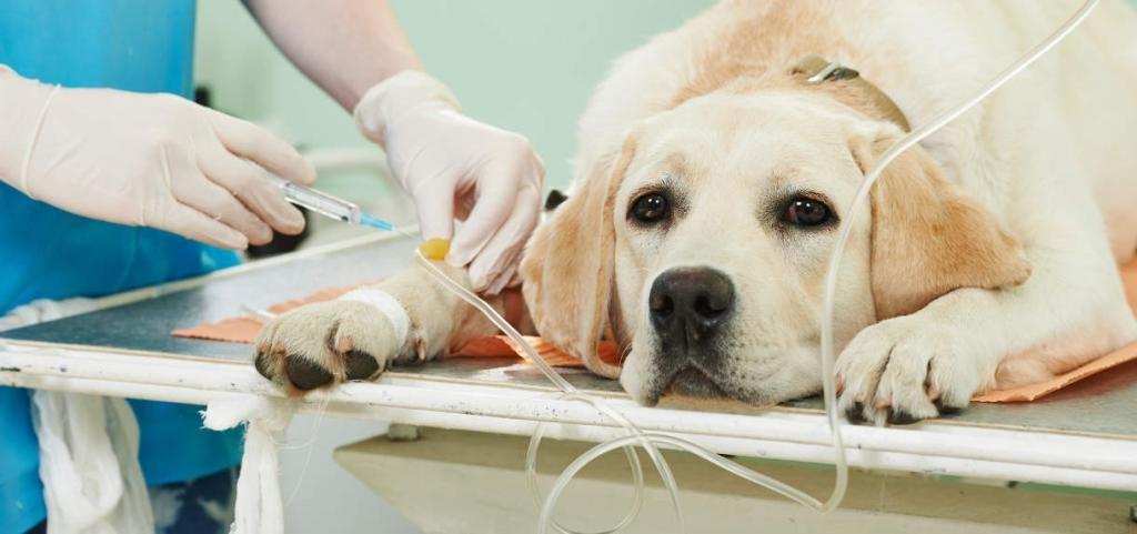 Гуманное усыпление и кремация домашних животных