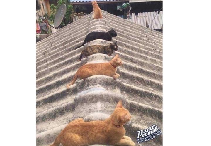 Ростовские коты удивили Интернет