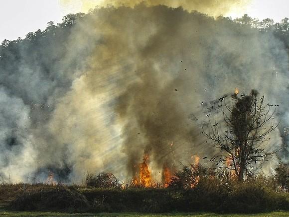 Неточные формулировки и пробелы – Минприроды представили на публичные обсуждения проект «О методике определения вреда (ущерба), причиненного лесам вследствие лесных пожаров»