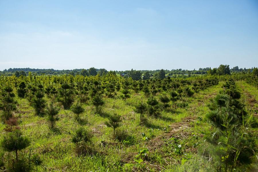 Питомник «Вершки и корешки» делает первые шаги в сфере реновации восполняемых природных ресурсов