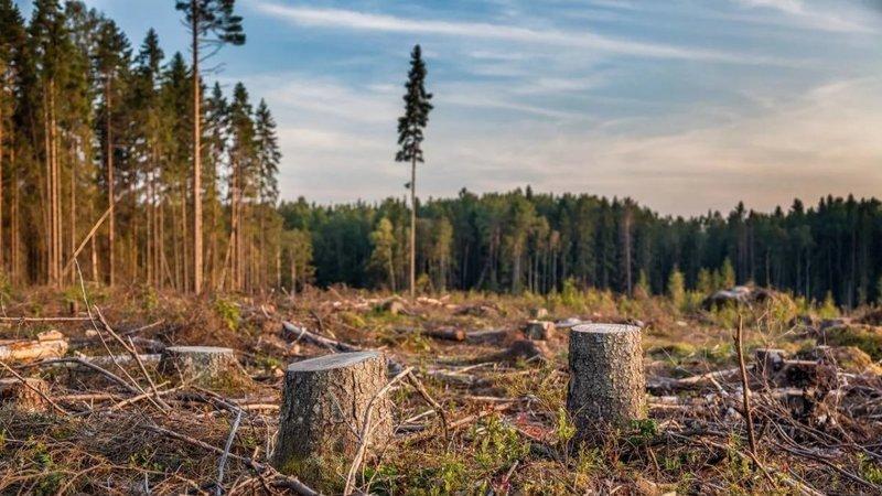 28 сентября Арбитражный суд Московской области проведет первое заседание по делу о застройке лесного участка в Красногорском районе