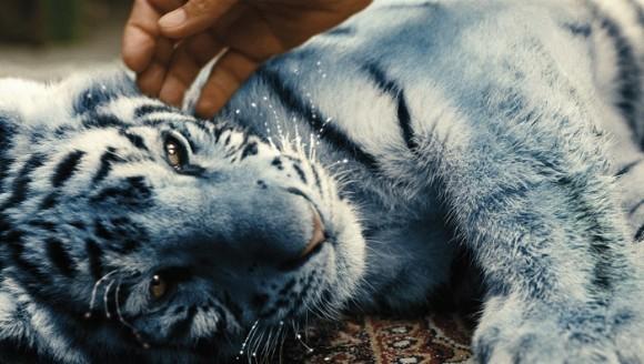 Der_blaue_tiger___blauer_tiger