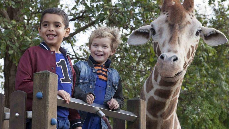 Mein_freund_die_giraffe___spielplatz16x9