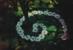 Logo_kunst_in_der_natur