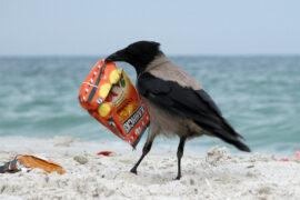 Ко дню Черного моря в Сочи откроется музей мусора