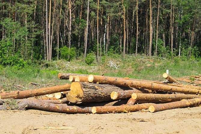 В Тольятти объявили «охоту» на «черного» лесоруба