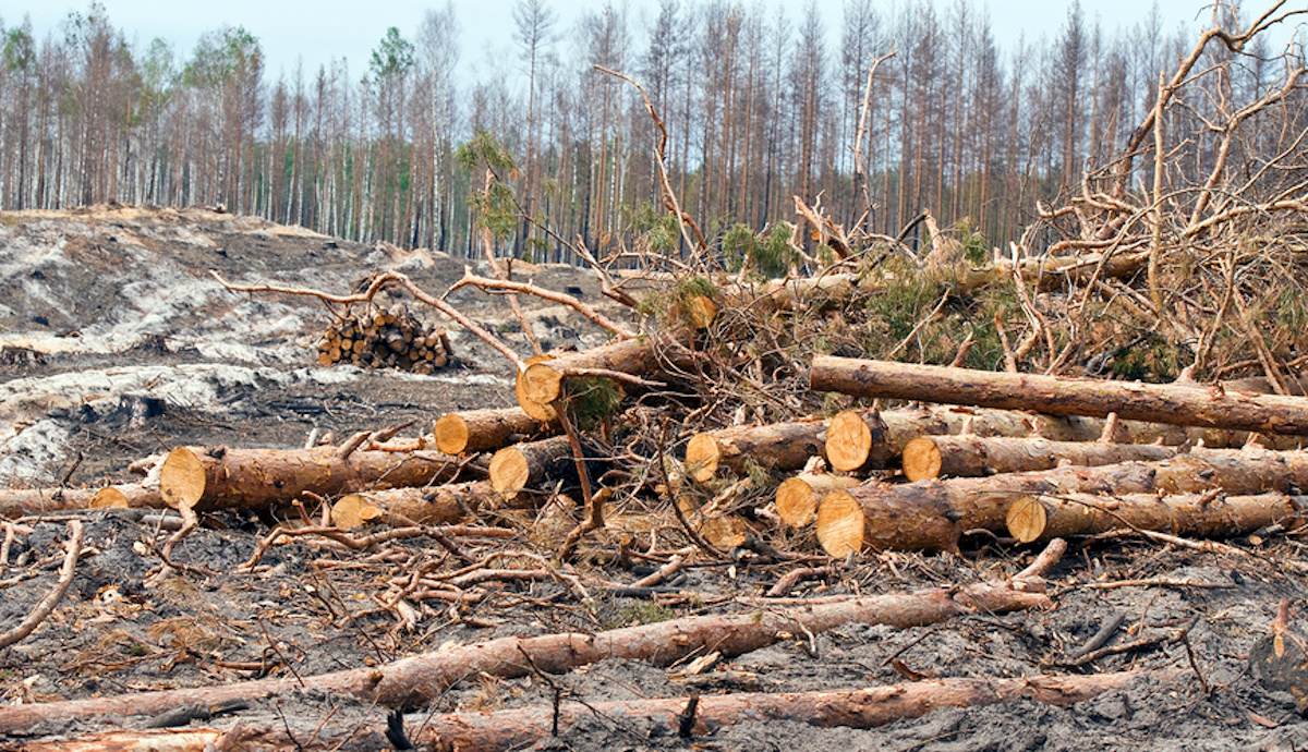 Путин поручил запретить с 2022 года экспорт необработанной древесины