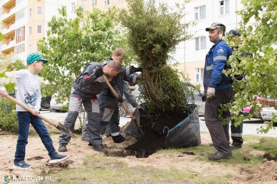 Зеленые краски Нижневартовска