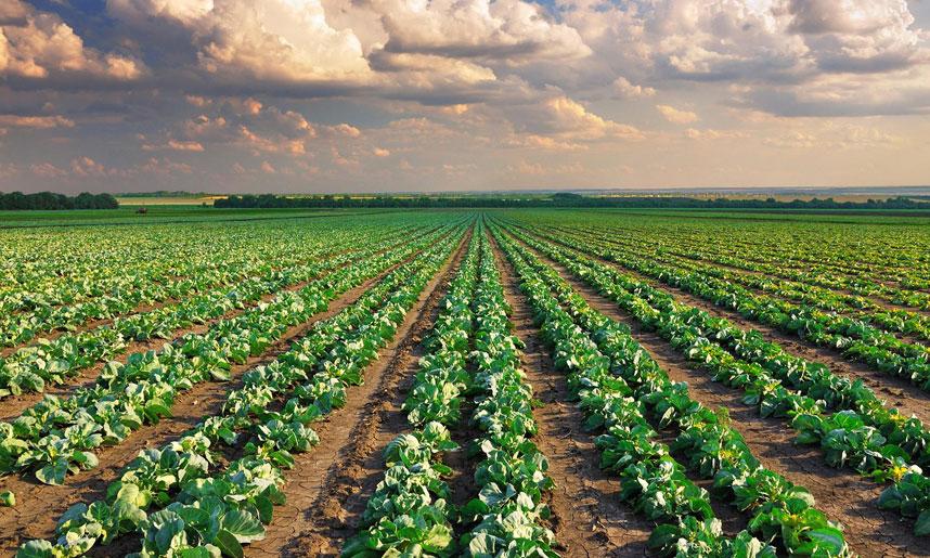 ОНФ «Народный фермер» выступает за проработку вопроса о самозанятых в российском сельском хозяйстве