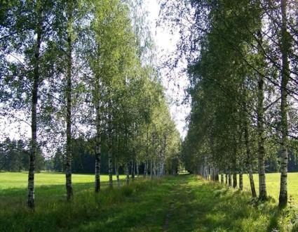 Район Белая Берёза в Павловском парке
