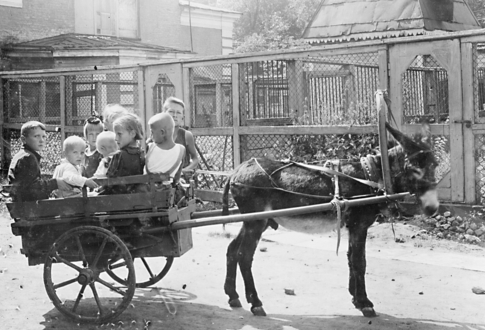 Ленинградский зоосад во время войны