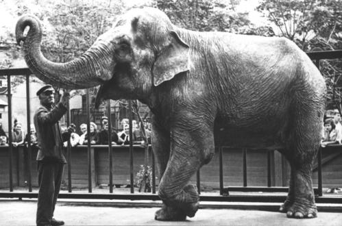 Слониха Бетти - любимица посетителей