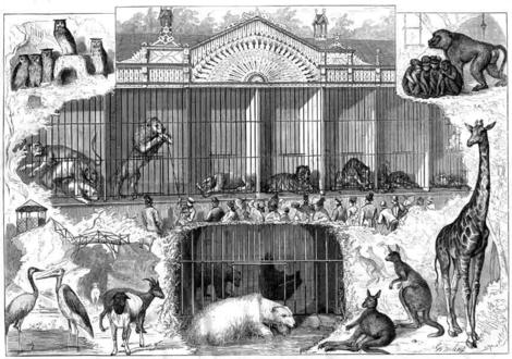 Гравюра - зоосад в 1870-е