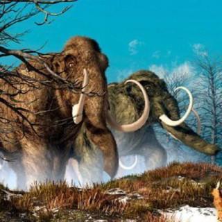 Якутский мамонт. История древней находки