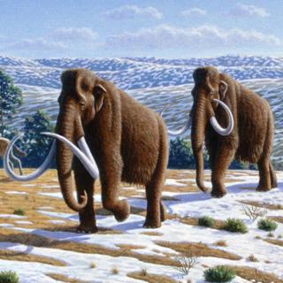 Берёзовский мамонт. История открытия
